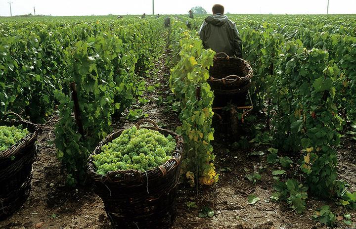 Lavoro: il Direttivo di Confagricoltura decide di riaprire le trattative per il rinnovo dei contratti provinciali di lavoro per gli operai agricoli