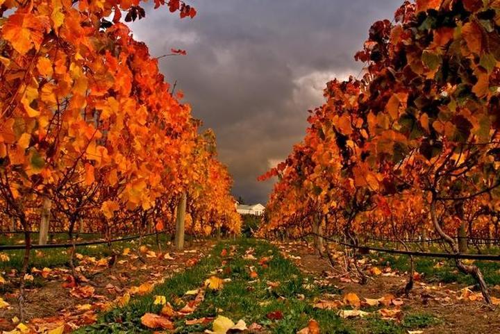 Il testo unico del vino è legge: organizzazioni della filiera soddisfatte