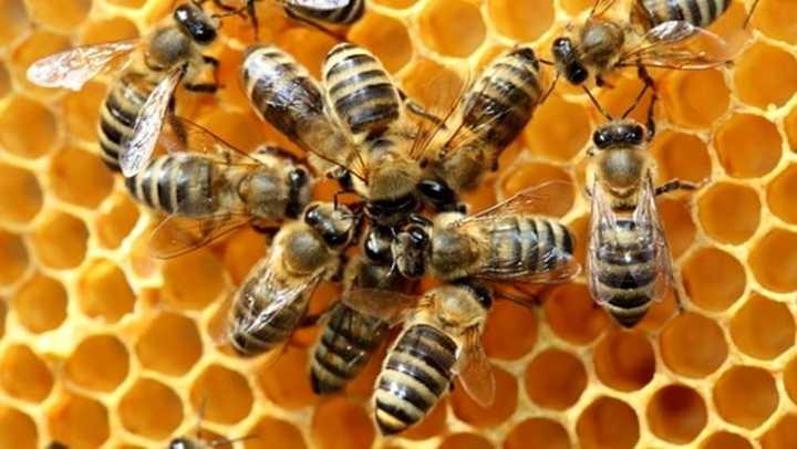 Convegno su apicoltura toscana 18 ottobre 2018. Invito