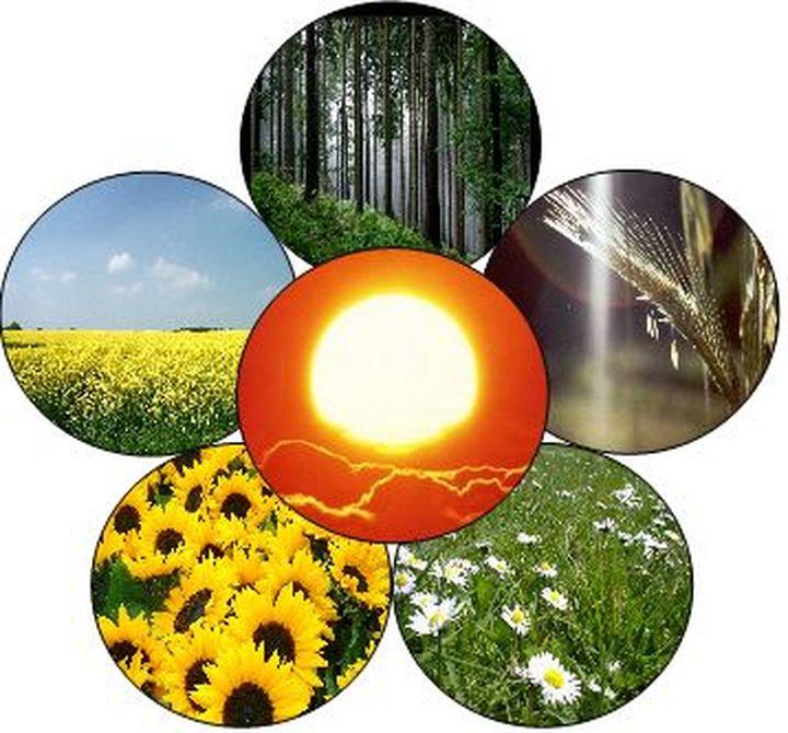 """Confagricoltura: """"Positivi gli incentivi per i piccoli impianti di produzione elettrica, ma ora occorre andare avanti nello sviluppo delle bioenergie"""""""