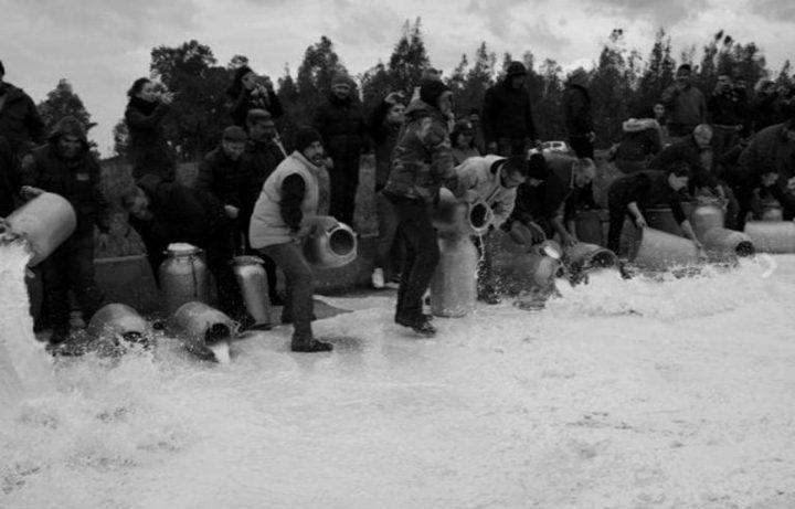 Crisi latte in Sardegna, Confagricoltura: il mondo agricolo resti unito ed attento al futuro del comparto