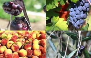 NEW FARMERS. Un viaggio tra i nuovi agricoltori: ecco le puntate dal 19 al 22 febbraio in onda su Tv 2000