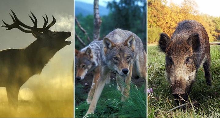Confagricoltura sollecita l'iter legislativo delle norme sul problema della fauna selvatica