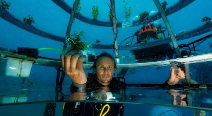 L'orto di Nemo, lavori in corso per ricostruire le serre sottomarine
