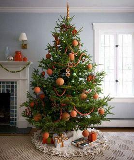 Confagricoltura: Gli alberi di Natale veri e certificati sono una scelta sostenibile