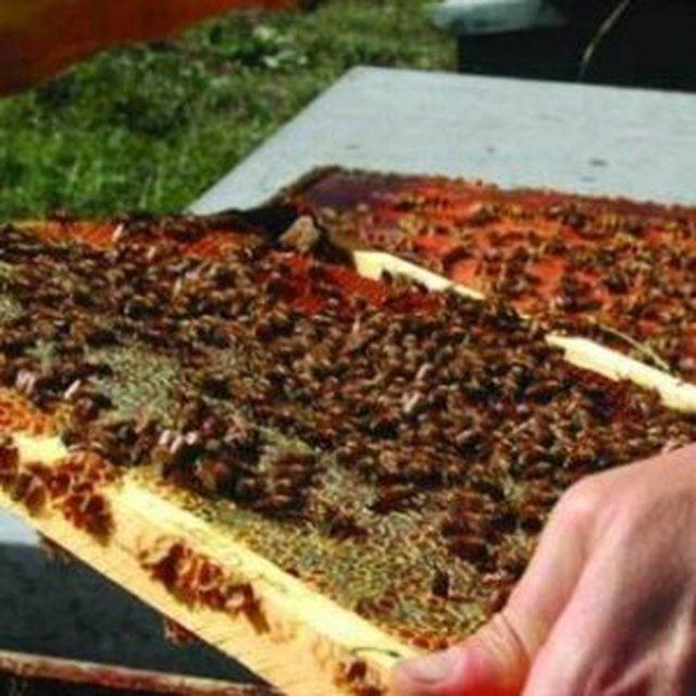 """In Toscana è emergenza miele: """"Produzione dimezzata, trovare quello d'acacia è già impossibile"""""""
