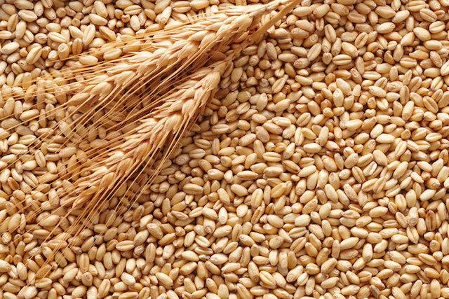 """Crisi del grano, Guidi: """"Il settore va rivitalizzato da nuovi rapporti di filiera e misure precise per contrastare la crisi"""""""