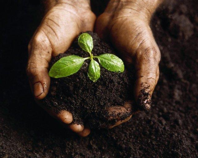 Il settore primario sempre più attendo alla sostenibilità. Avviata la seconda edizione del Master in Agricoltura Sociale patrocinato da Confagricoltura