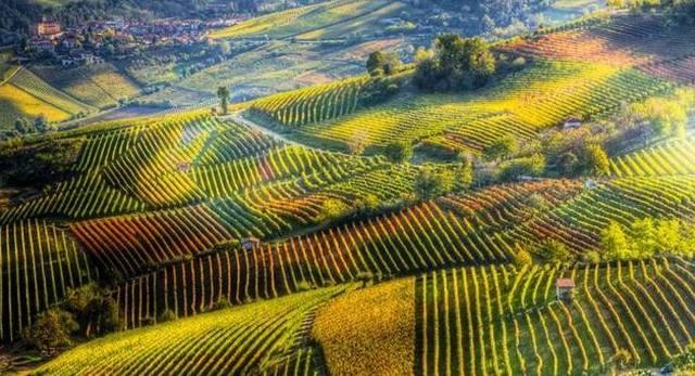 Testo unico del vino: organizzazioni della filiera soddisfatte dopo l'ok del Senato
