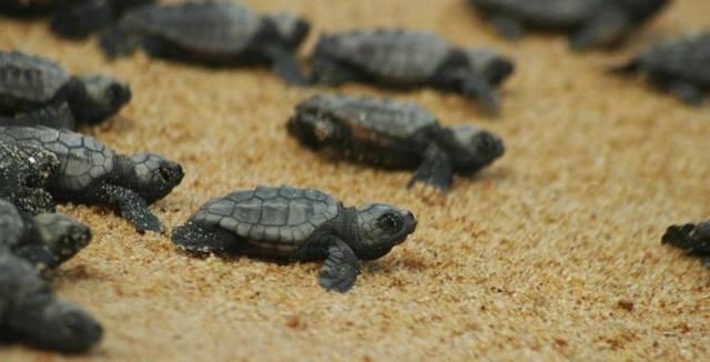 Pescatori in prima linea per proteggere le tartarughe marine