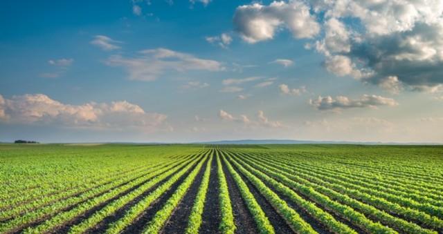 FIERAGRICOLA, CONFAGRICOLTURA: UNA PAC PIU' SEMPLICE ED EFFICACE PER UN'AGRICOLTURA INNOVATIVA E COMPETITIVA