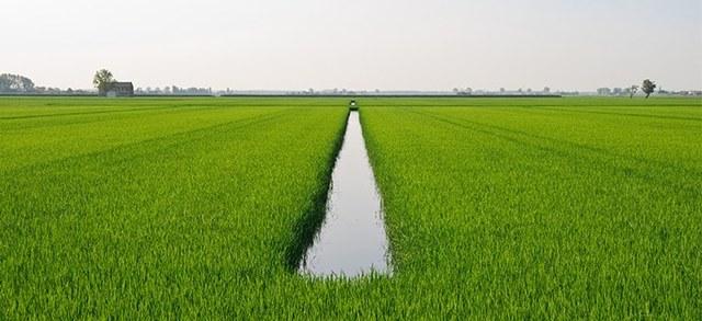 Riso, Giansanti (Confagricoltura): da domani in vigore i dazi sulle importazioni da Cambogia e Myanmar. Rilanciare la filiera riso italiana