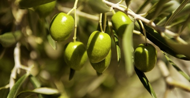 AGRINSIEME: OLIVICOLTURA, IN D.L. EMERGENZE ACCOLTE NOSTRE RICHIESTE A SOSTEGNO DEL COMPARTO