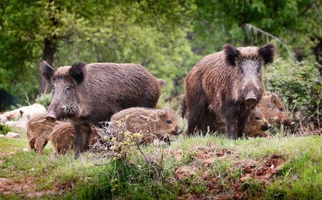 Fauna selvatica, Confagricoltura all'audizione al Senato: fondamentale assicurare sicurezza, salute, ristoro danni, prevenzione