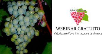 L'economia circolare come strumento per migliorare l'efficienza e il marketing delle aziende vitivinicole Valorizzare l'uva immatura e le vinacce - webinar gratuito – 15 febbraio alle ore 11