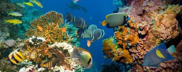 Invito stampa 30/7, Orbetello (Grosseto) - Pesca e rispetto dell'ambiente marino e lagunare