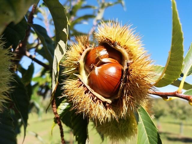 Fedagripesca, in Lunigiana un incontro per la tutela di castanicoltura e apicoltura